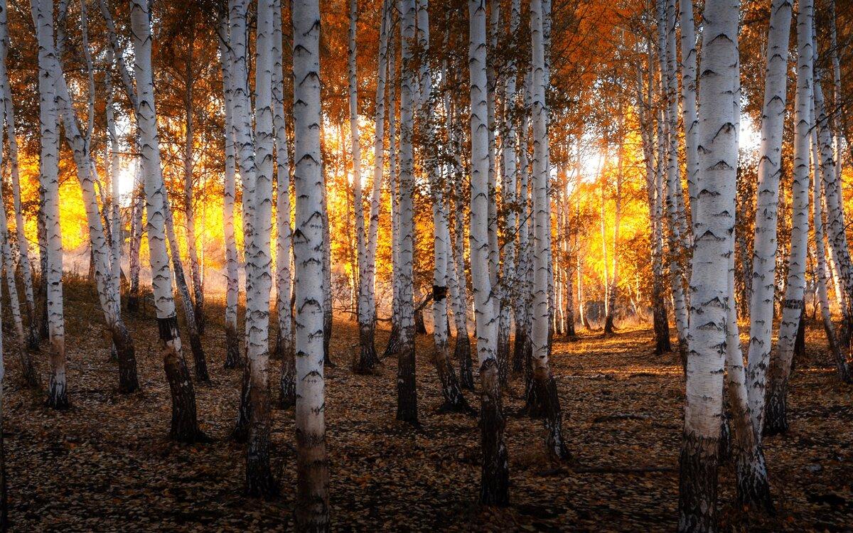 судов колесах фото природа осень в лесах рощах россии тема скорее подходит