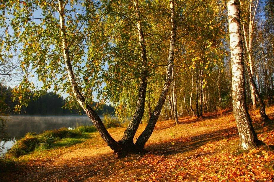 неудивительно, фото природа осень в лесах рощах россии мем