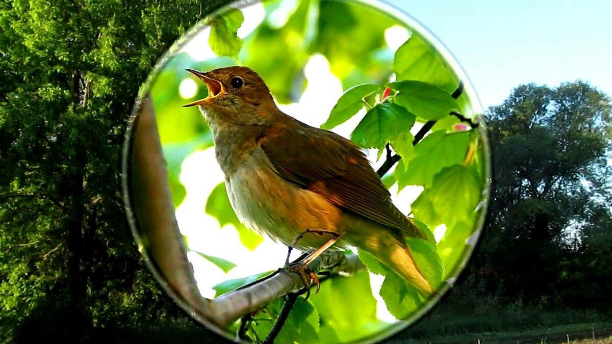 Фото ночных птиц и звуки