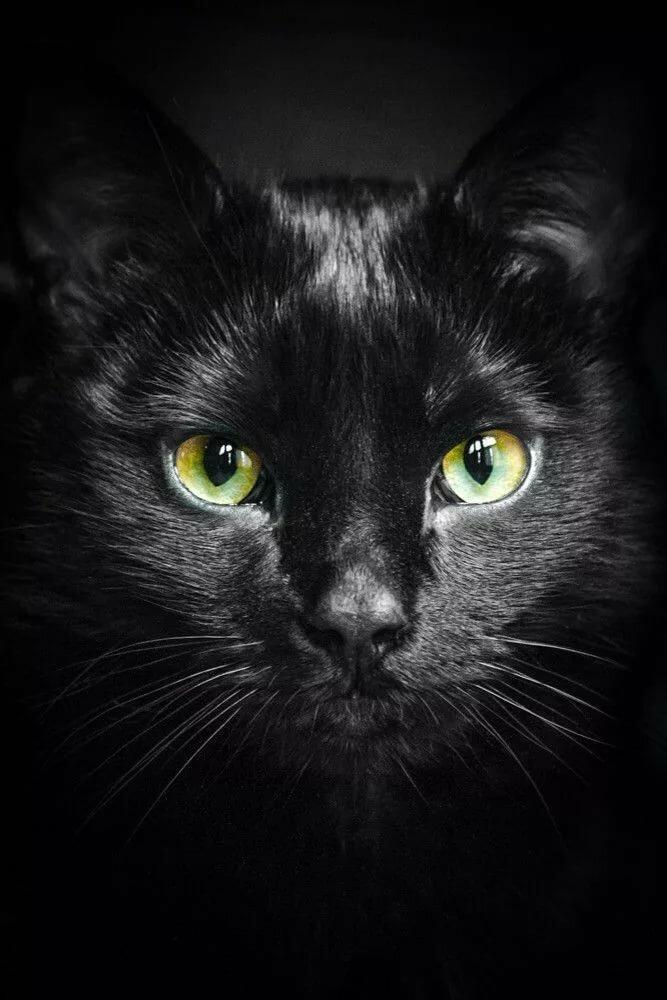 тазовском картинки глаз черной кошки торжестве ваши гости