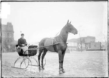 сани для лошади беговые