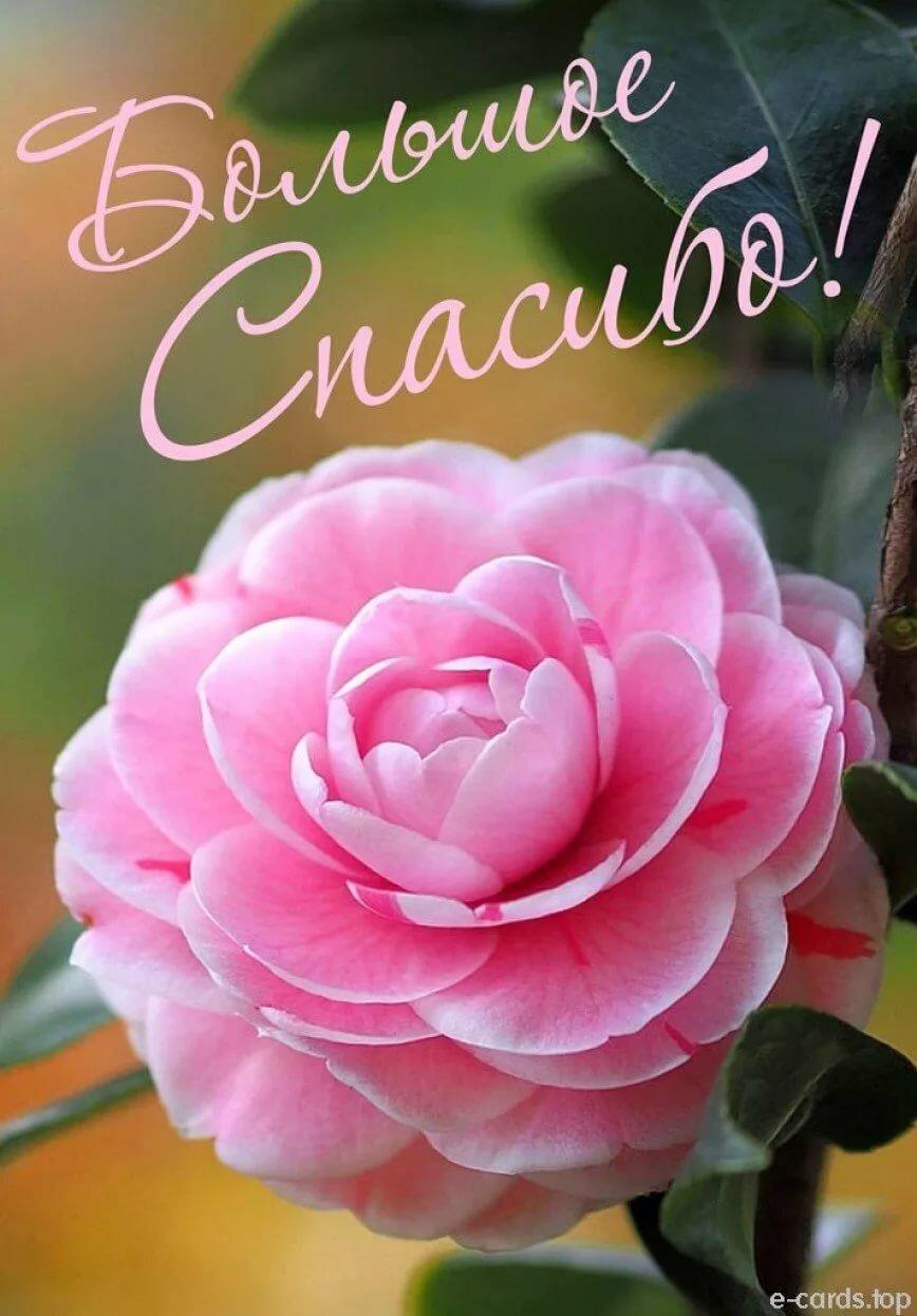 Картинка спасибо с цветком