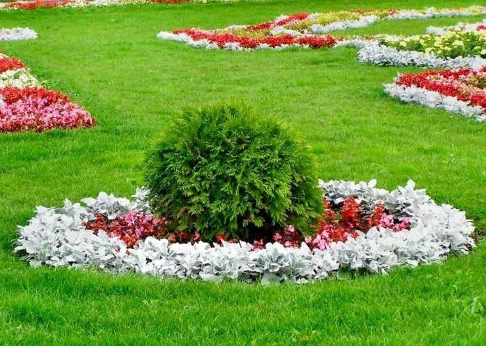 Дизайн цветников и газонов фото пород
