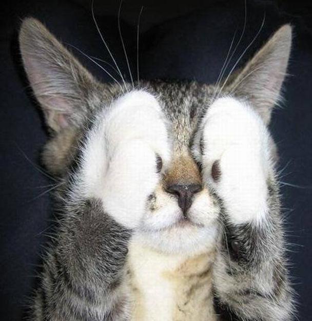Прикольные картинки с котенком с надписями
