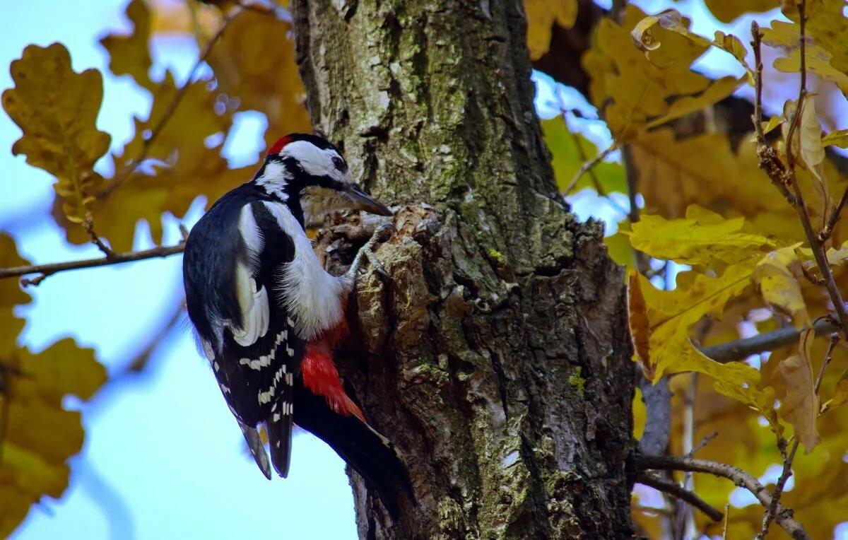 птицы в лесу фото