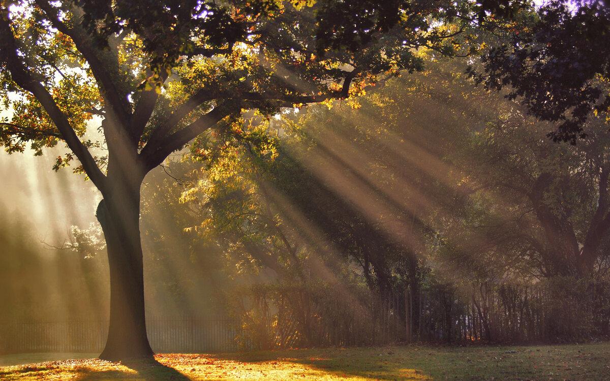 затем картинки осенний парк и солнечные лучи это