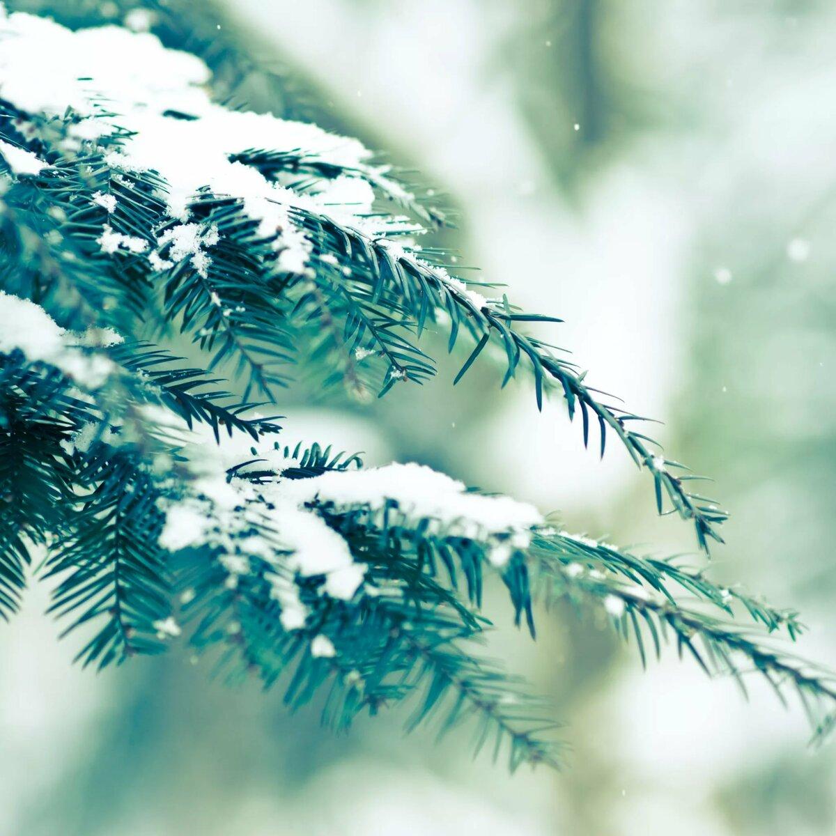 Зимние картинки в хорошем качестве на телефон