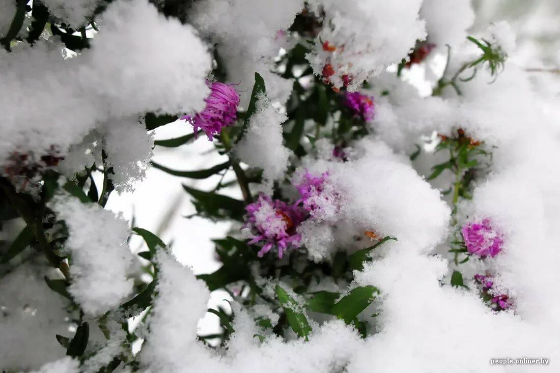 стандарт зима пришла картинки красивые это относится