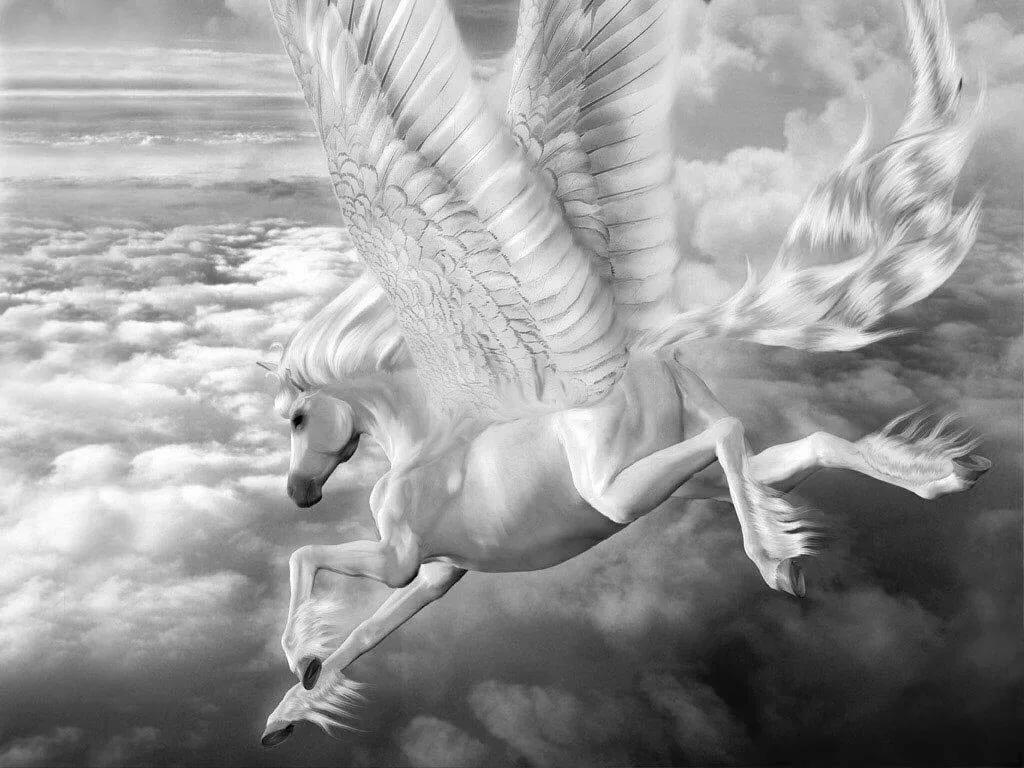 Картинки крылатые кони