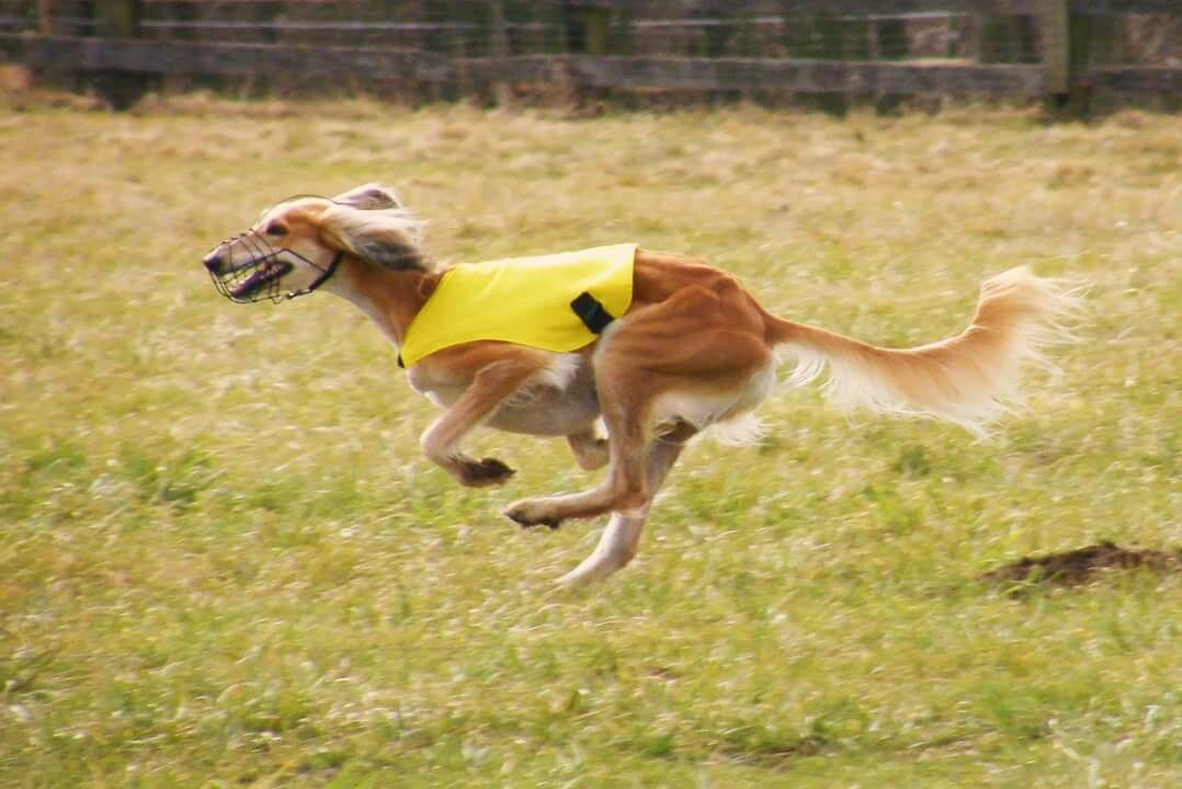 картинки бегущей собаки с боку собравшиеся женщины бросают