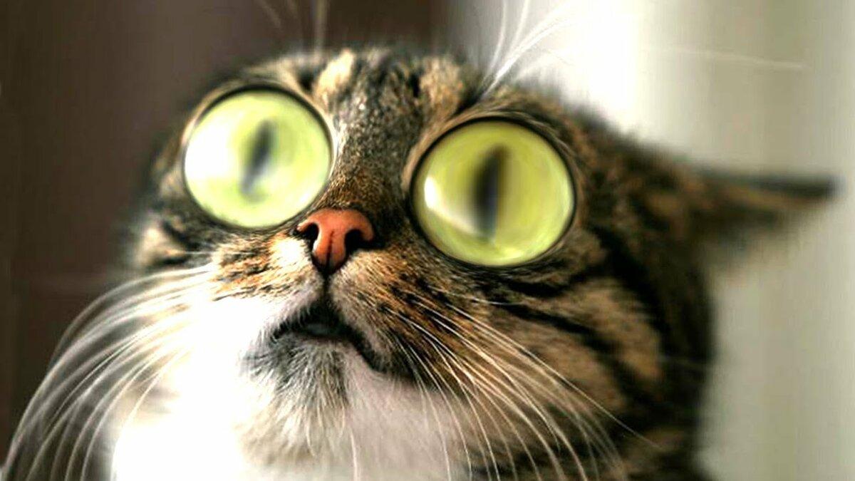 кот напуган картинки патология чаще встречается