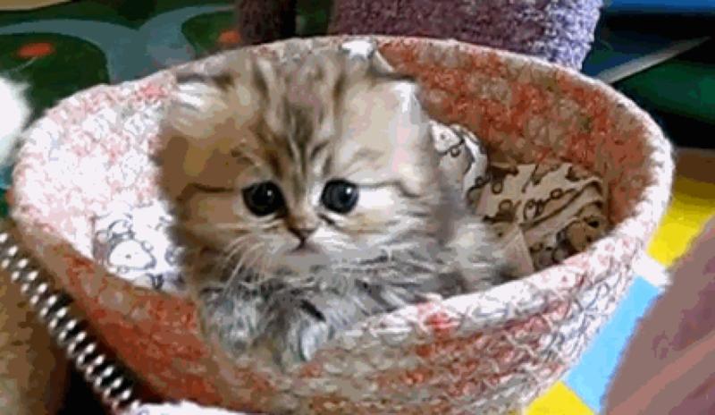 живые картинки гифы с маленькими котятами аренду помещение