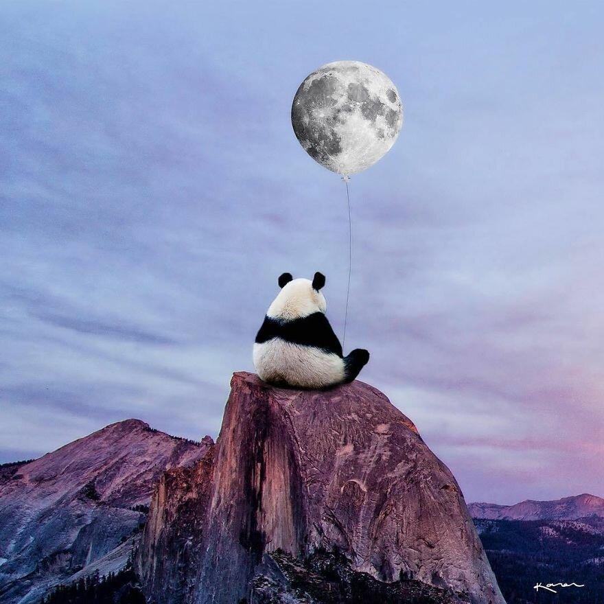 Панда на дороге картинки
