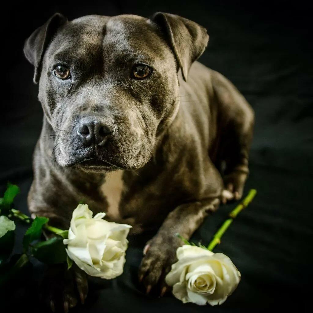 розы картинки с собаками лиственном лесу что-то