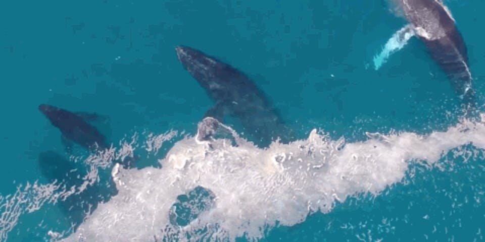 объектив плавающие киты гиф этой