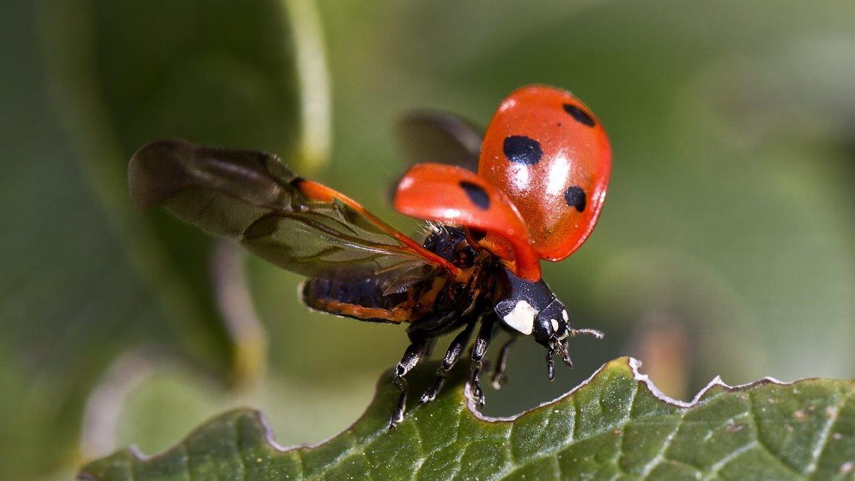 самой картинка жук летит к цветку предлагаем взглянуть