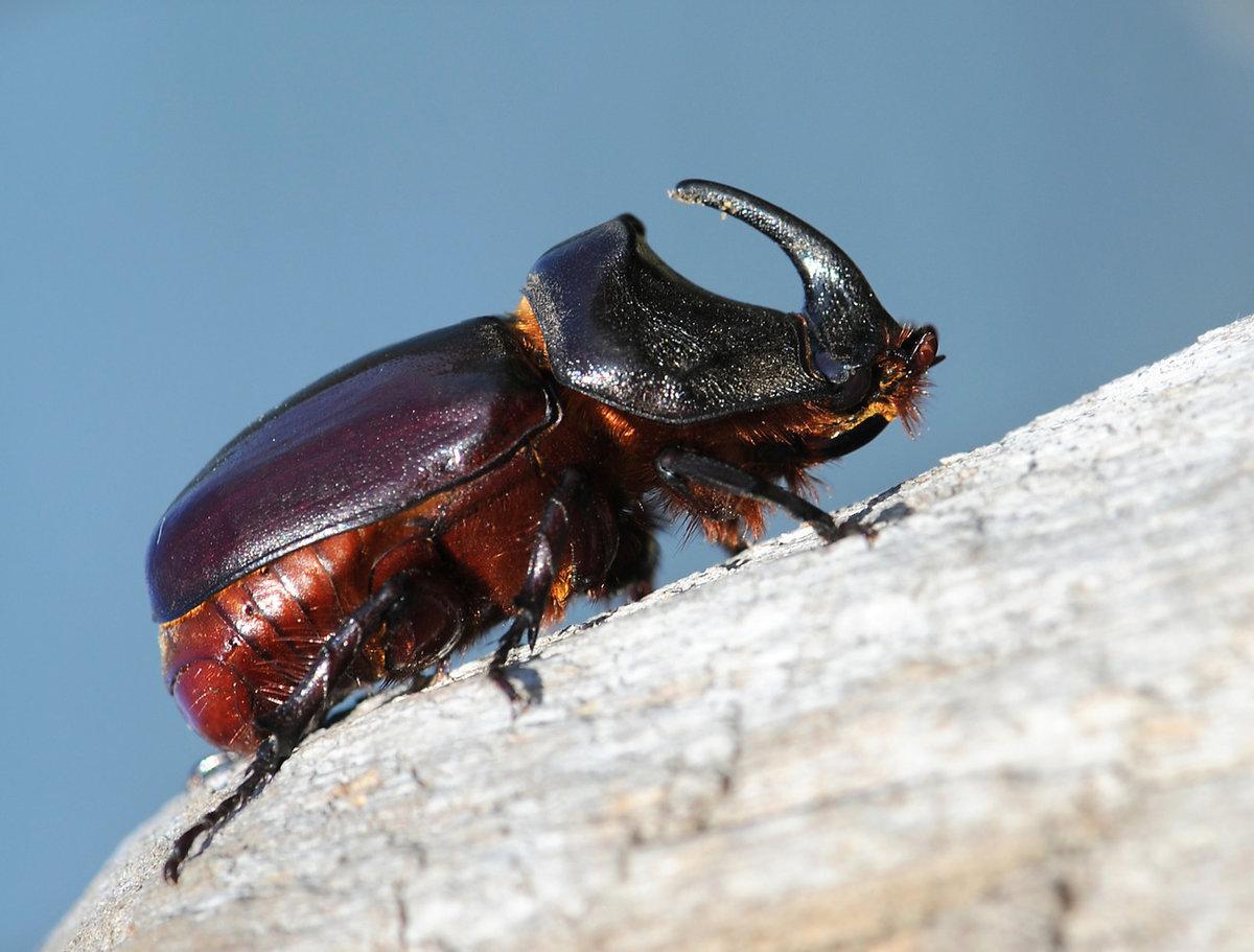 жуки с названием крупных животных сказала ему, что