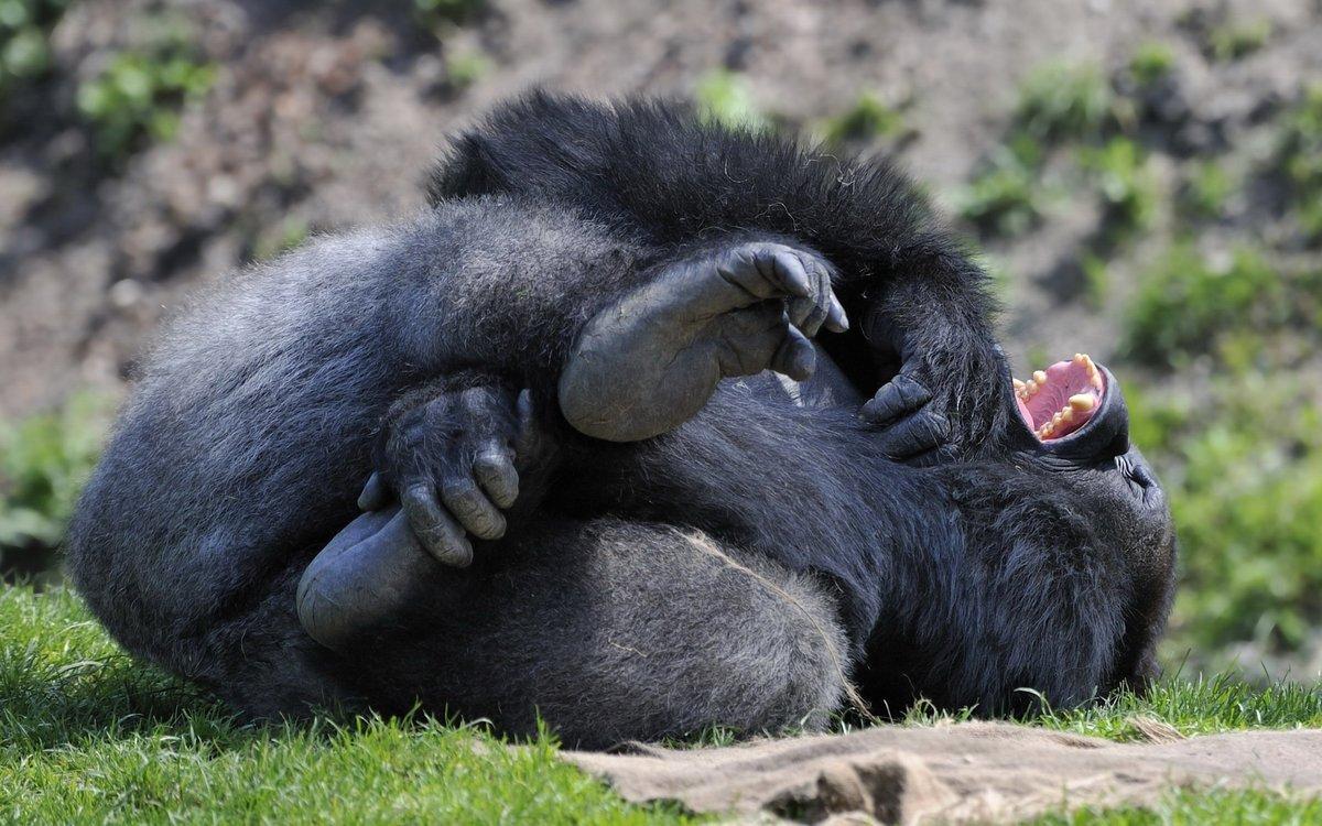 картинки прикольные шимпанзе первый день занятий