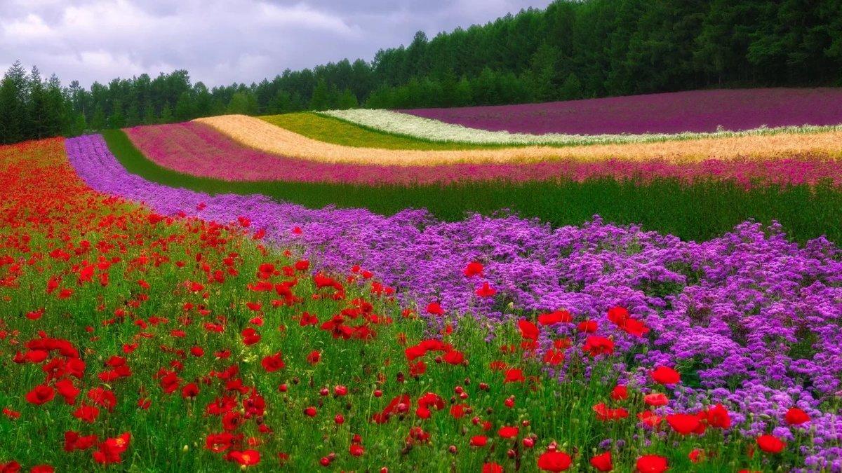 Открытки поле с цветами