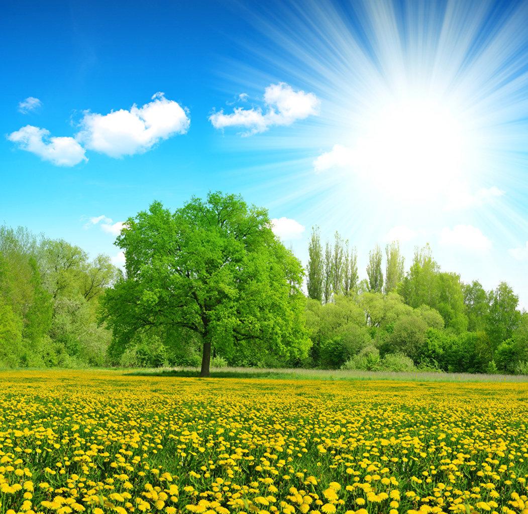 фотографии солнечного дня