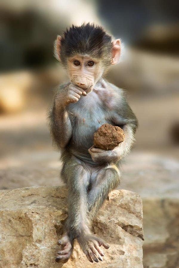 Хорошим настроением, картинки прикольных обезьянок