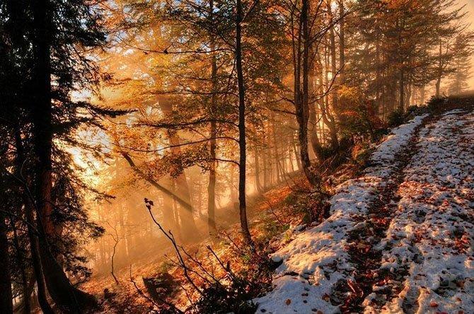 туман и хвойный лес