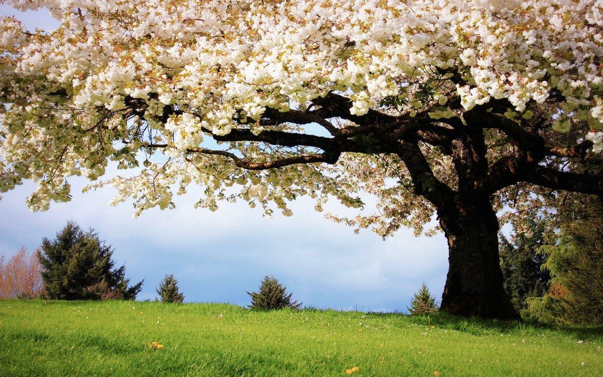Картинки весенний пейзаж на рабочий стол на весь экран красивые