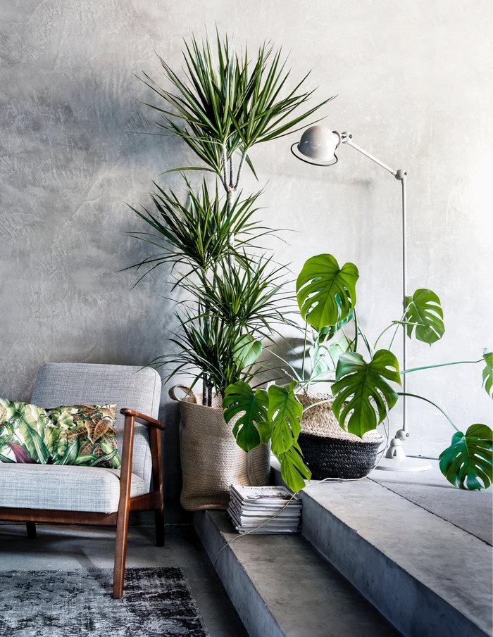 5 неприхотливых растений, которые выживут даже при плохом освещении.