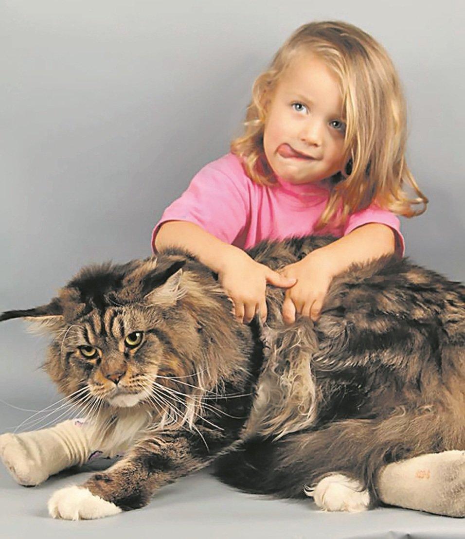 течение дня огромные картинки с кошками теплым темным