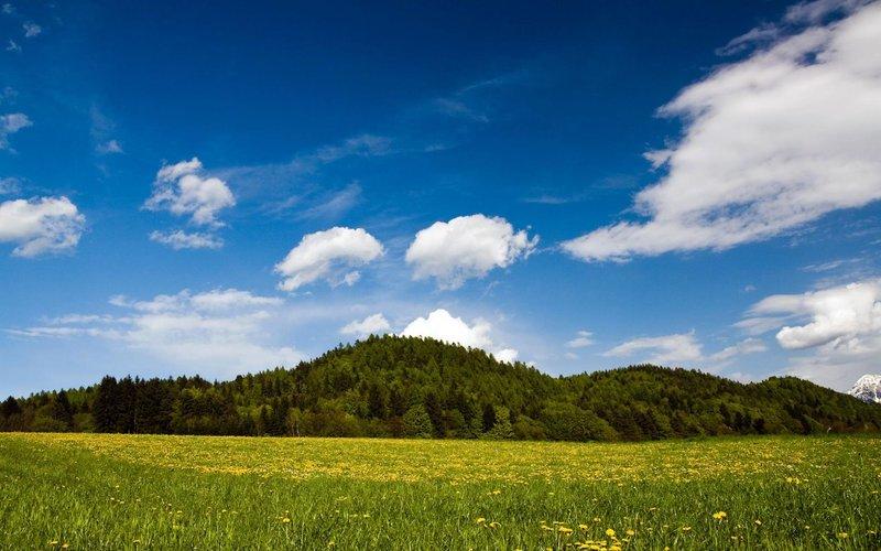 Русское поле и сказочный лес обои 1920x1200. Обои Русское поле и сказочный лес 1920x1200
