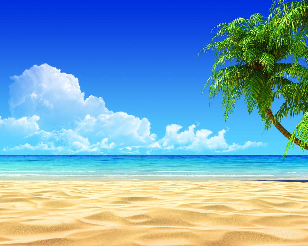 Картинка с пальмой и песком