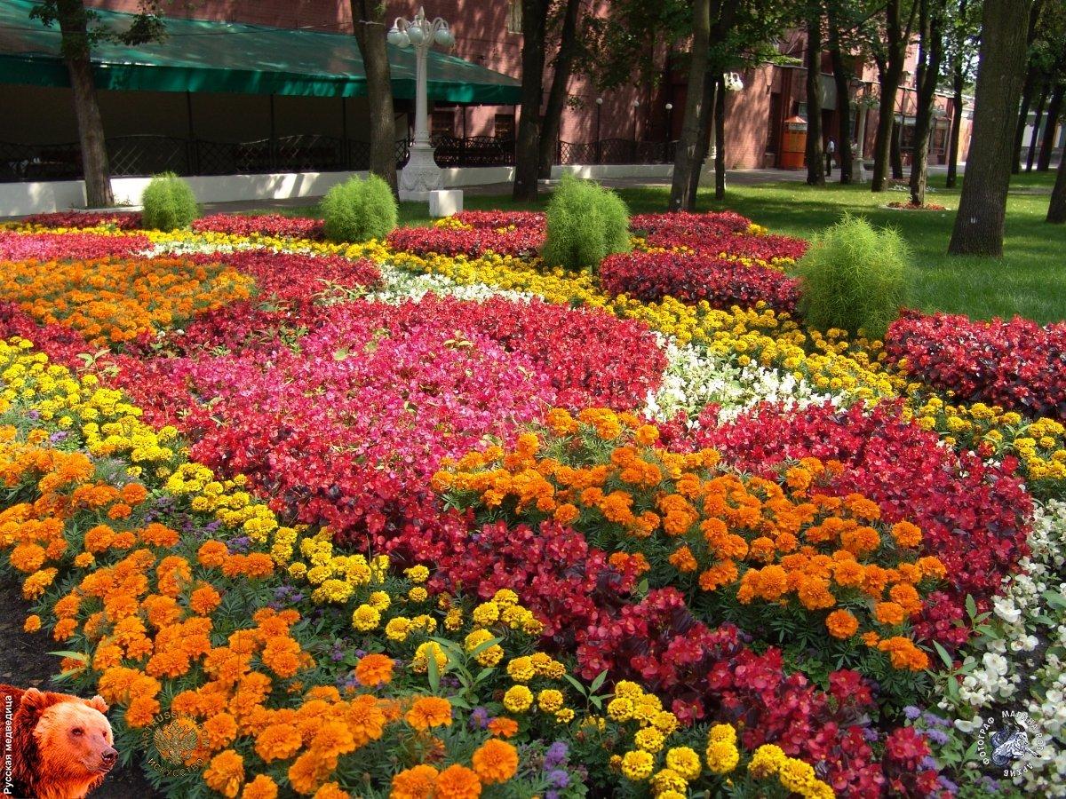 гласил, каталог цветущих клумб их фото цветов