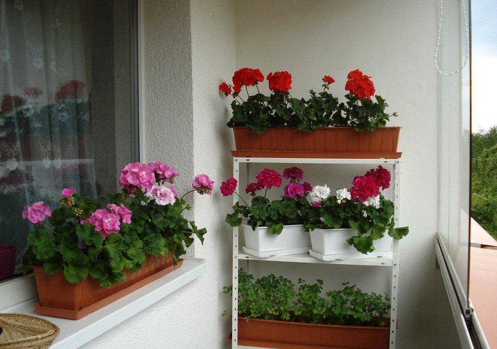 Красиво на балконе разместить цветы фото если