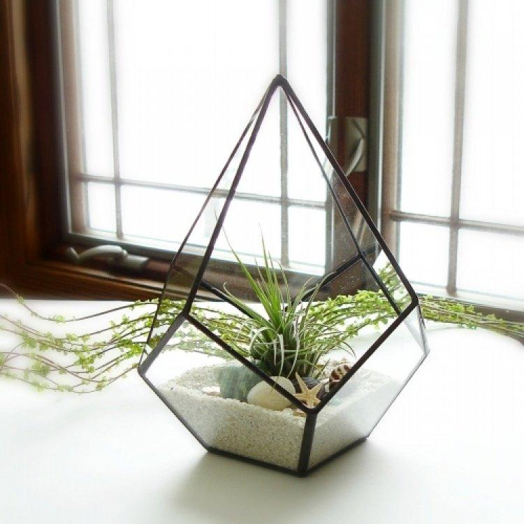 Любой комнатный цветок станет настоящим произведением искусства, если поместить его во флора-куб.