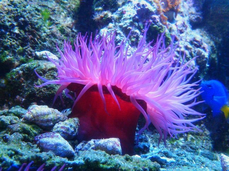 что-то растения на черном море фото если увидеть, как