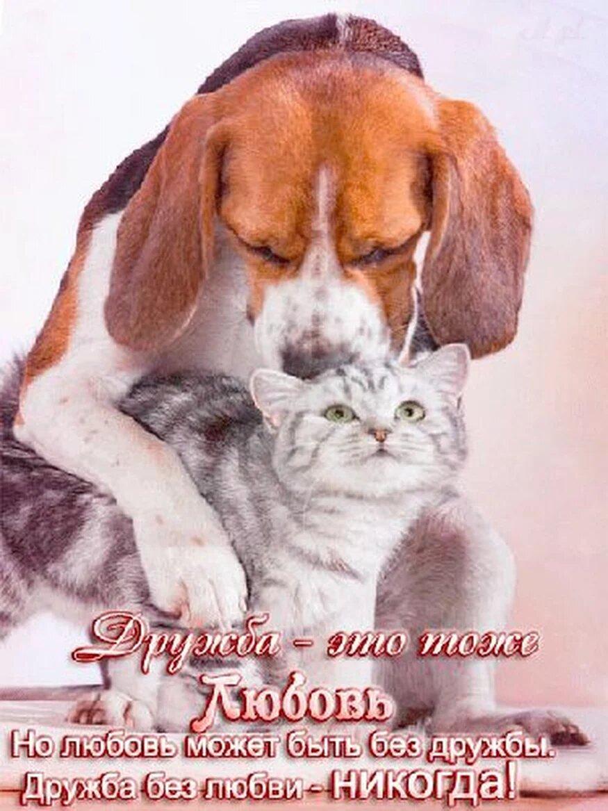 Открытки любимым и верным друзьям, пожелания удачи