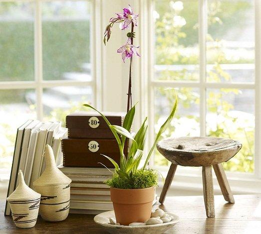 Комнатные растения в интерьере дома или квартиры – это отдельный вопрос, к которому важно подходить творчески и, естественно, обогатившись кое-какими знаниями.