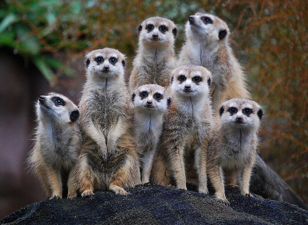 Прикольная картинка группы животных