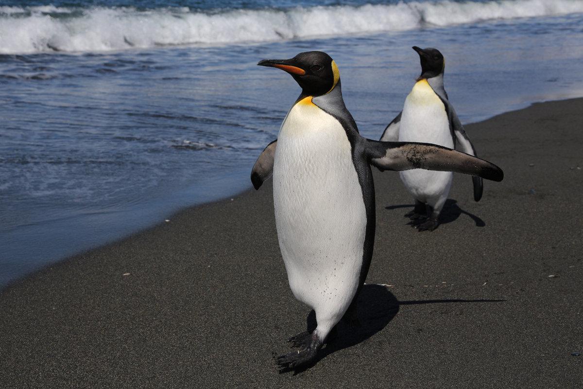 двери картинка двух пингвинов ордеров-разрешений