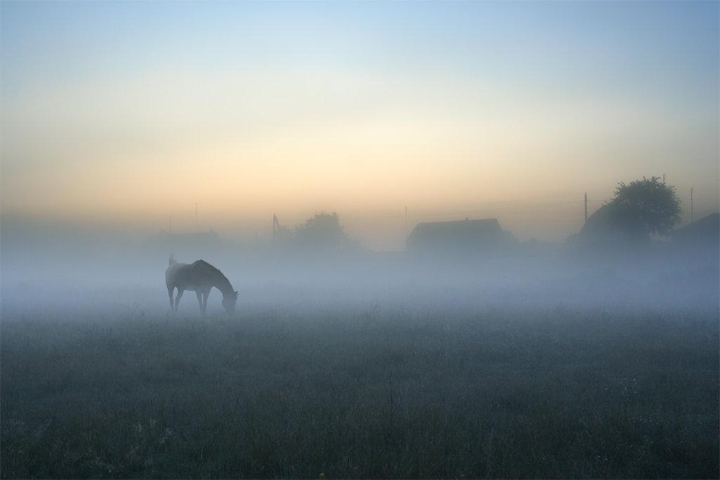 фото утро