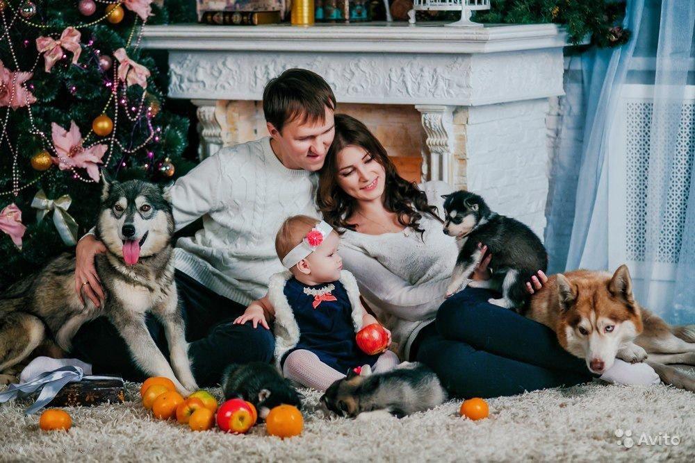 именно фото с щенками хаски и малышом годовалым болтики гаечки