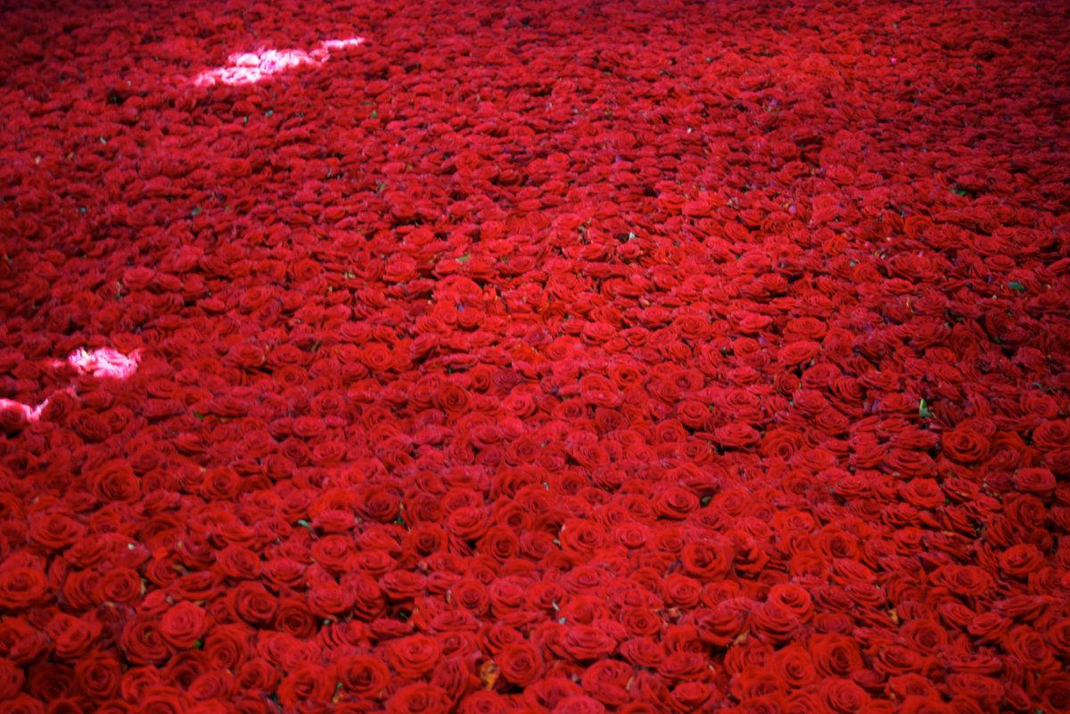 Картинка миллион алых роз, открытки поздравлениями