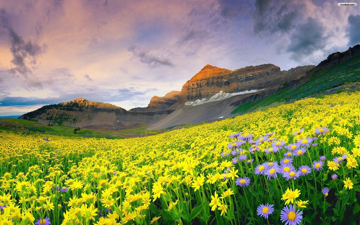 Yellow Mountain Flowers Wallpaperg 19201200 Card From User