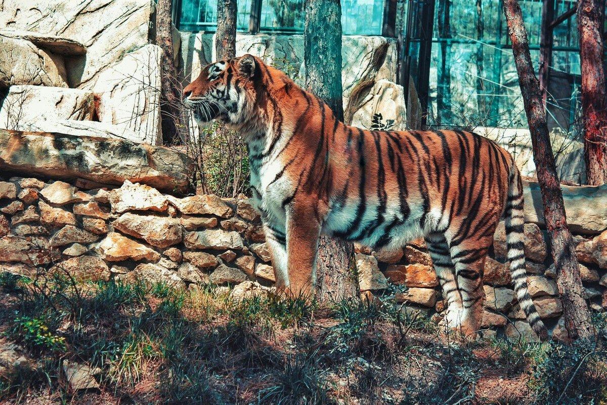 Картинки геленджик сафари парк