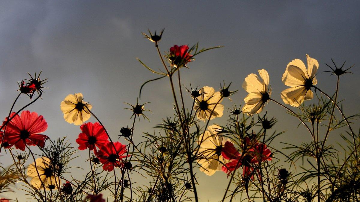 Белые смешные, картинки цветы на фоне неба