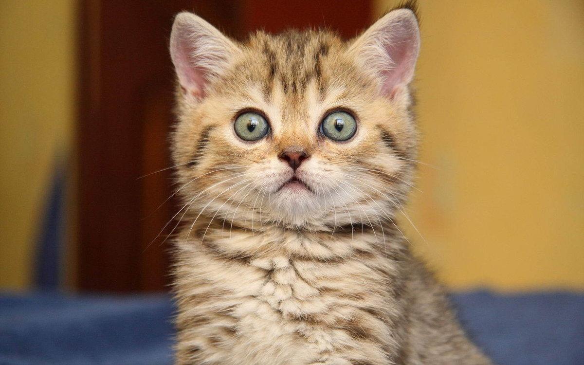 Приветом, мемы с котами картинки с надписями 2019