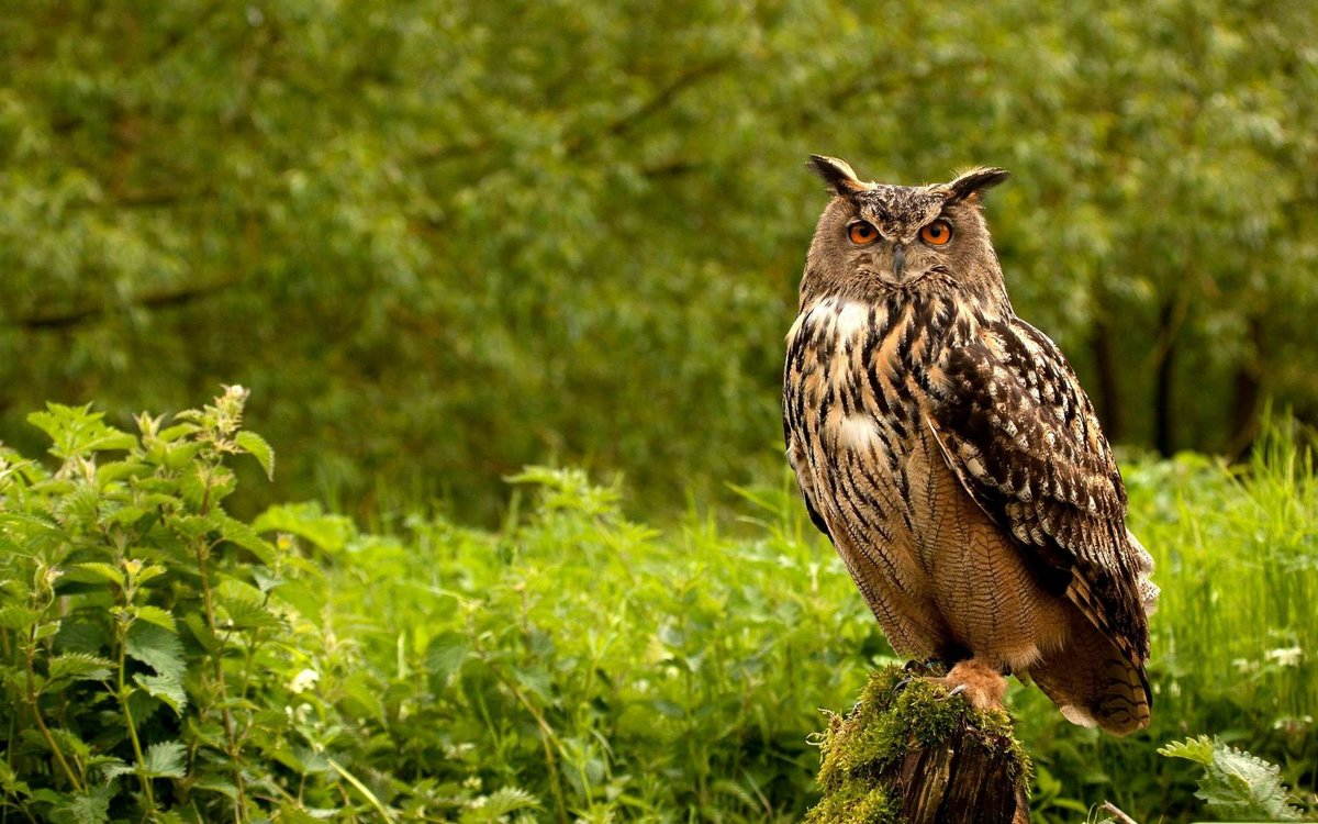 Картинки по запросу птицы лес