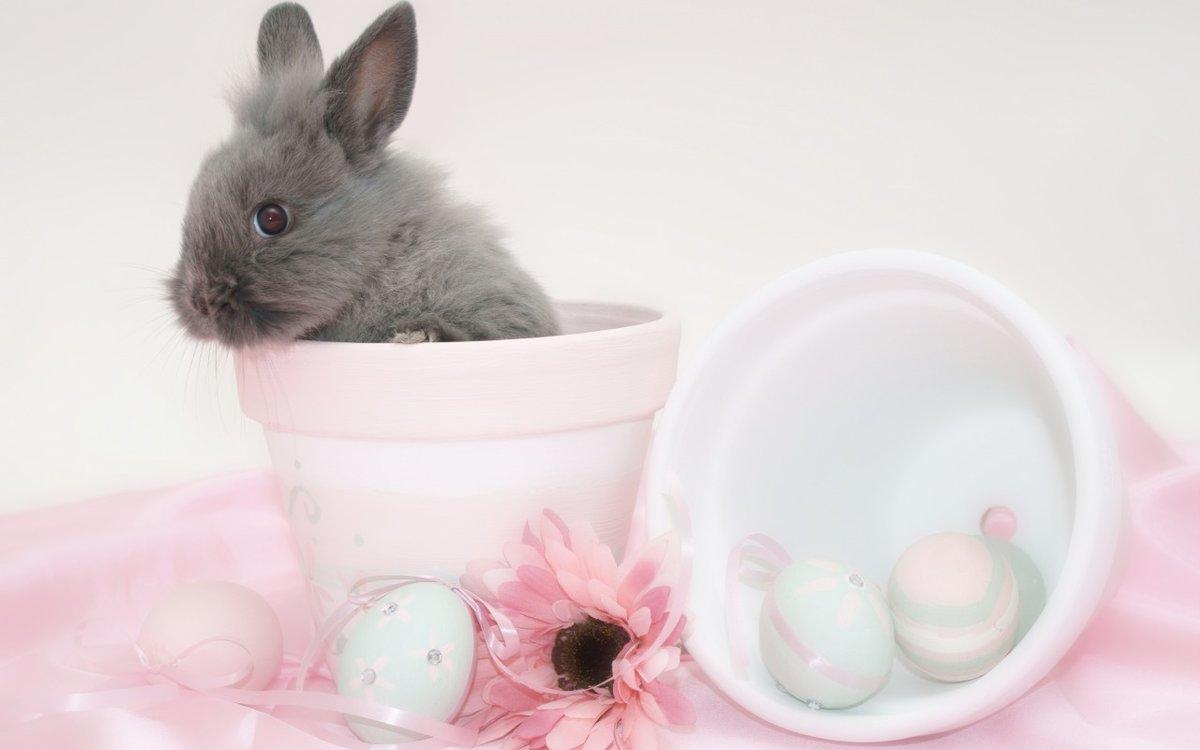 кролики в кружках картинки афрокосички плетутся вручную