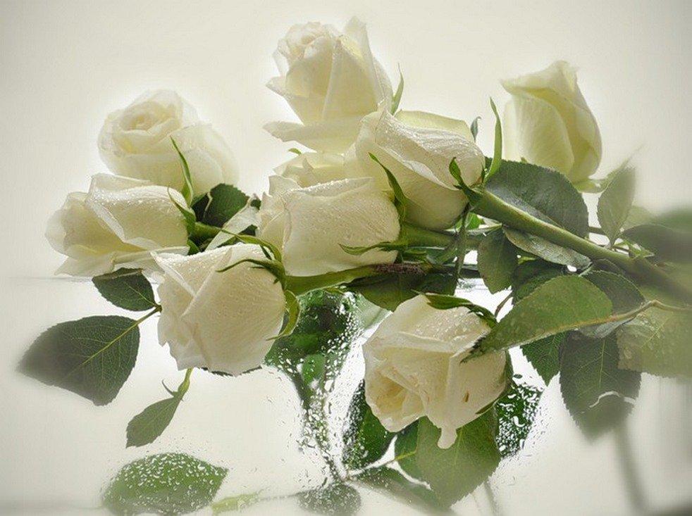 Открытка одна белая роза, напоминаю
