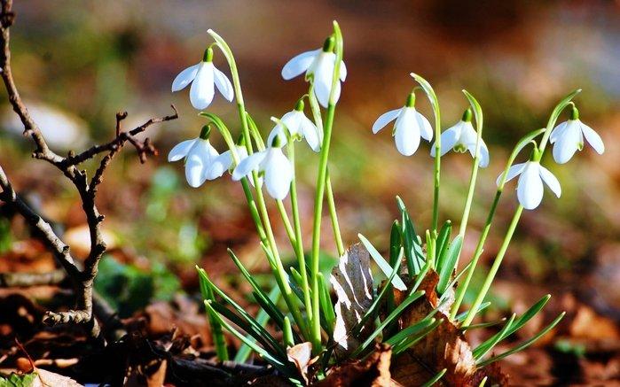 Весна уже не за горами, а там и лето - не успеешь оглянуться))